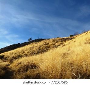 Golden grass on a hillside, California