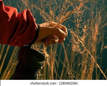 Golden grass talk in hand. Woman hand torn long blades of dry grass, natural decoration