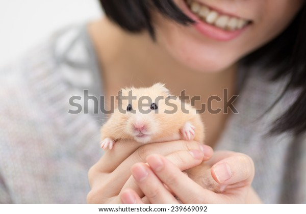 Golden Hamster in woman's hand.
