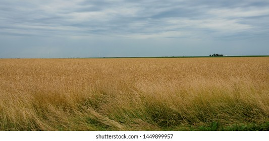 Golden Hayfield in the Heartland