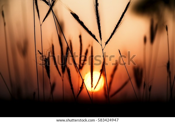 Golden heaven light Hope concept abstract blurred background from nature sunset evening night