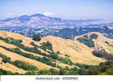Golden hills in Contra Costa county, mount Diablo in the background, San Francisco bay, California