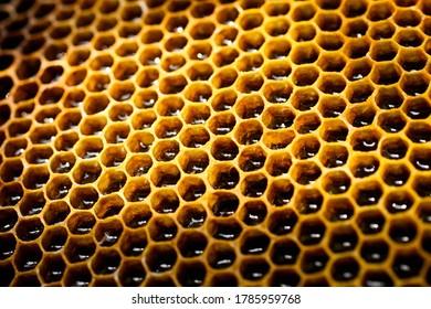 Peigne de miel doré en gros plan. Apiculture.
