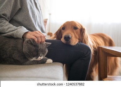 The Golden Hound and the cat are beside the owner.