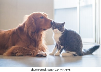 The Golden Hound and the kitten get close.