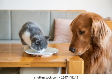 The Golden Hound watched the kitten eat.