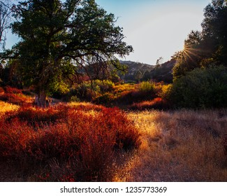 Golden hour in the chaparral forest of Pinnacles National Park