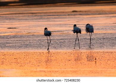 Golden hour with Flamingo.
