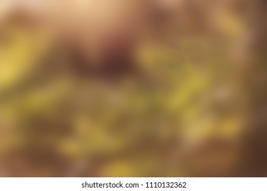 Golden hour nature background