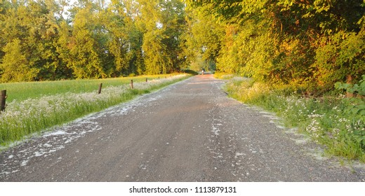 Golden Hour shot of a country road in the spring with cottonwood blossoms on the ground