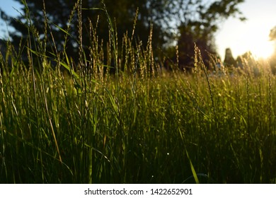 Golden hour sunlight shining on a grassy field near Portland, Oregon
