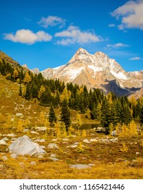 Golden Larch in the Purcell Mountain Range - Fall / Autumn Jumbo Pass landscape. British Columbia, Canada