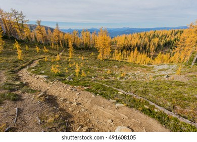 Golden Larches of Mt. Frosty, Manning Park