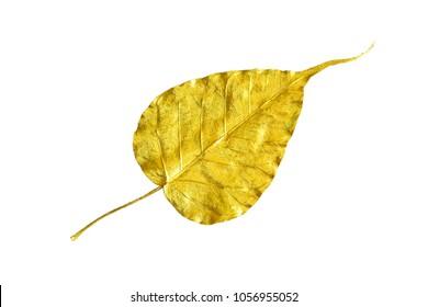 Golden leaf / Gold Sacred fig leaf. Isolated on white background.