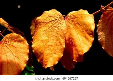 Golden leaf on dark background