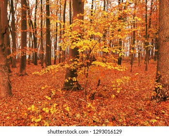 golden leaves in an autumn forest