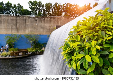 Golden leaves of Ficus altissima Blume with waterfall and river at the dam of Nakhon Sawan,Thailand with sunlight background at the park,Public place for peple to relax.