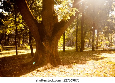 Golden leaves on branch, autumn wood with sun rays, beautiful landscape