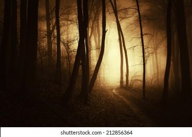 golden light in dark forest in autumn