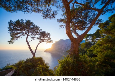 Golden light glowing through pine tree silhouettes as the sun sets behind a scenic panoramic view of the iconic cliffs of the island of Capri, near Naples, Italy