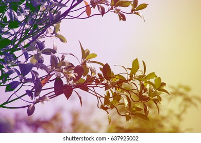 Golden light with leaves for background