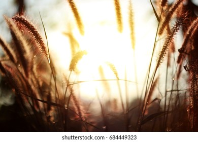 Golden light in the morning with a spring meadow. Nature background.grass and sunlight, Morning in the field