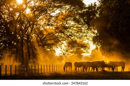 Golden Light in the stables