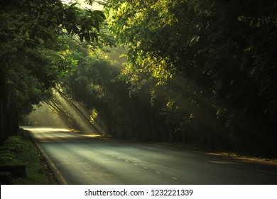 Golden majestic light beams shining through tree on the road in the morning.