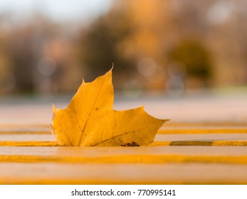 Golden maple leave stuck in a wooden bench in a park. With beautiful soft bokeh background and light flares. Leave is on a place where people love to sit and relax.