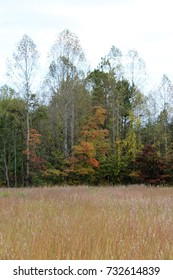 golden meadow of grass in a field in the fall with leaves changing color on the trees