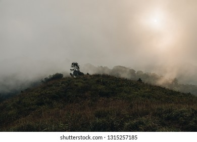 Golden meadow with sunlight in fog on background, misery mist, lonely concept, text space.