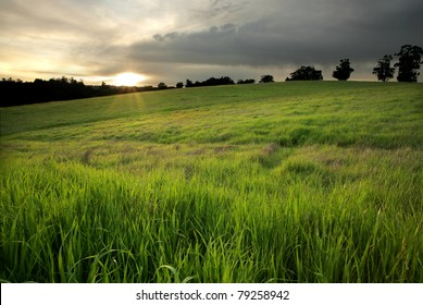 Golden Meadow at Sunset