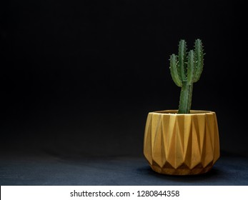 Golden metallic geometric planter on black background with copy space. Modern beautiful painted concrete planter and cactus plants or succulent plants. Home and garden decoration concept.