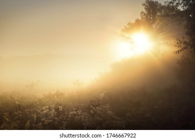 Golden morning sun rays flowing through the tree branches at sunrise, close-up. Morning fog. Mysterious forest scene. Latvia