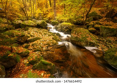 Golden nature in the Ilsetal, the Harz national Park