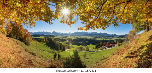 golden october with colorful beech trees in region Allgau, Bavaria