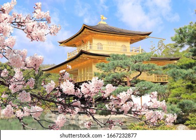 The Golden Pavilion (Kinkaku-ji Temple) and blooming sakura in Rokuon-ji complex (Deer Garden Temple), Kyoto, Japan. UNESCO world heritage site. Japanese hanami festival. Cherry blossoming season