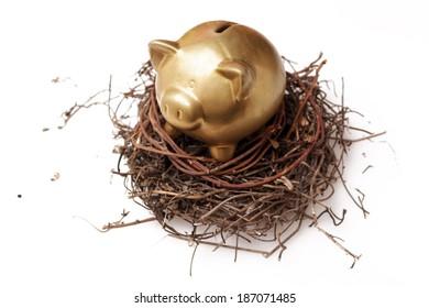 Golden piggy bank in nest on white background