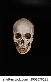 A Golden plated Bitcoin in the jaw of a human skull model. Low-key photo.
