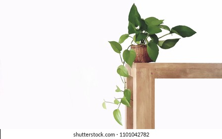 Golden pothos in the basket on wood ,Epipremnum aureum in pot isolated on white background  ,Drevi's ivy with copy space