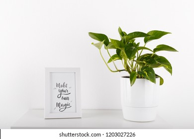 Golden pothos or devil's ivy in white modern flowerpot picture frame with quate Make your own magic
