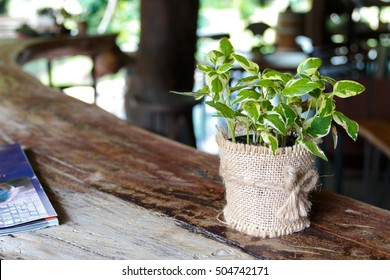 Golden Pothos on wooden table with blur background of coffee shop