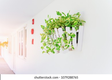 golden potos in white wooden flower pot on wall