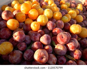 Golden and Red Plums