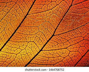 Golden red transparent leaf background