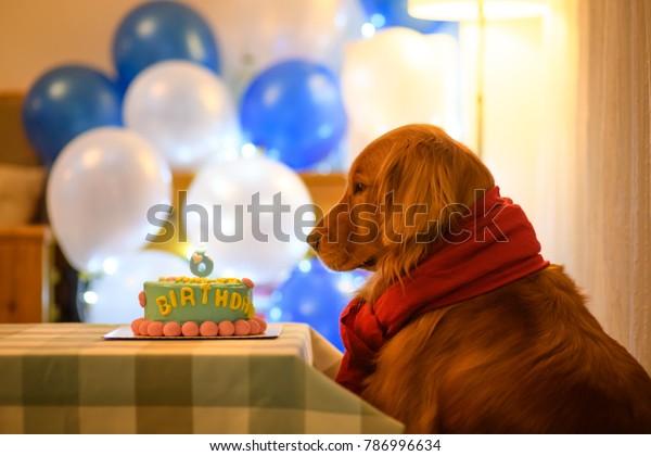 Brilliant Golden Retriever Birthday Cake Stock Photo Edit Now 786996634 Funny Birthday Cards Online Alyptdamsfinfo