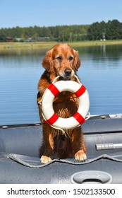 Golden retriever in the boat with a lifebuoy