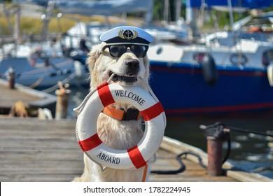 Am Yachthafen sitzt ein goldener Retriever mit Kapitänhut und schwarzer Sonnenbrille und hält ein Lifebuy im Mund