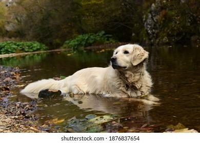 La recuperación de oro enfriándose en el río