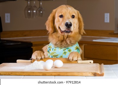 A golden retriever dog baking with eggs, flour and a rolling pin in a home kitchen.